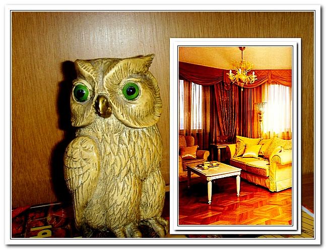 Сова с гостиной