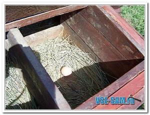 Яйцо в гнезде