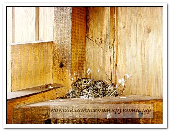 Гнездо с птенцами 2