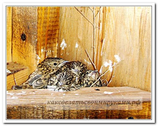 Гнездо с птенцами 3