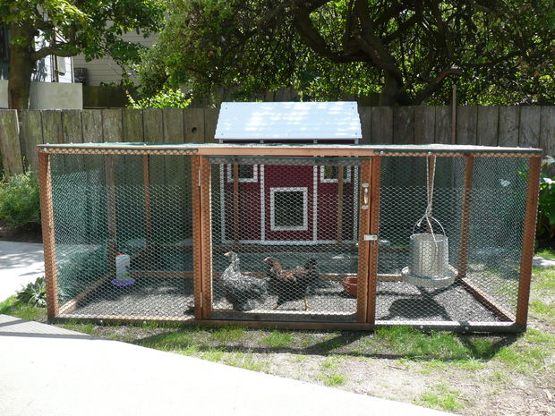 Urban Farming: Raising Backyard Chickens