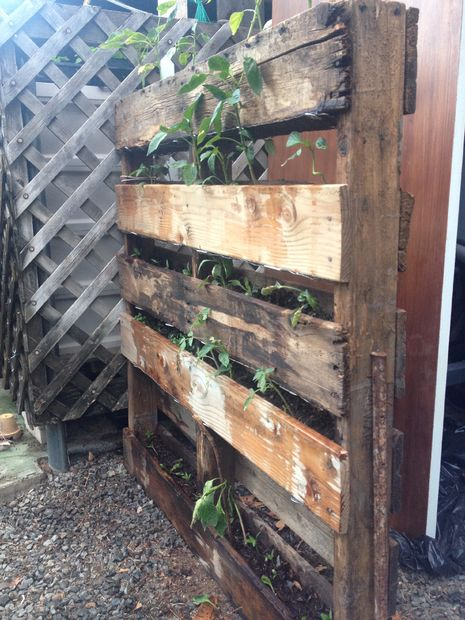 Double Sided Pallet Garden